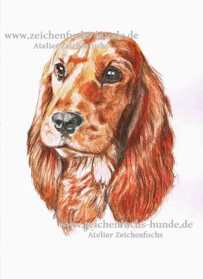 Aquarell eines English Cocker Spaniels