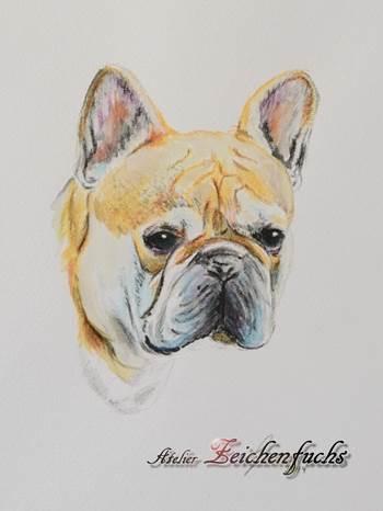 Aquarell einer Französischen Bulldogge