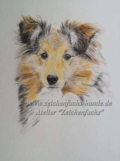 Aquarell eines Shetland Sheepdogs