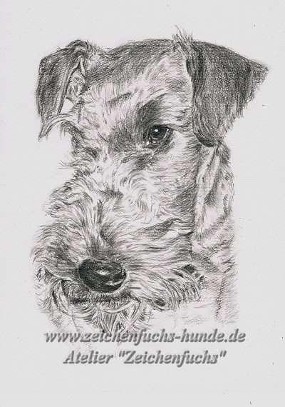 Bleistiftzeichnung Airedale Terriers Calla