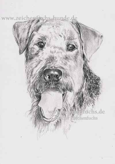 Bleistiftzeichnung eines Airedale Terriers