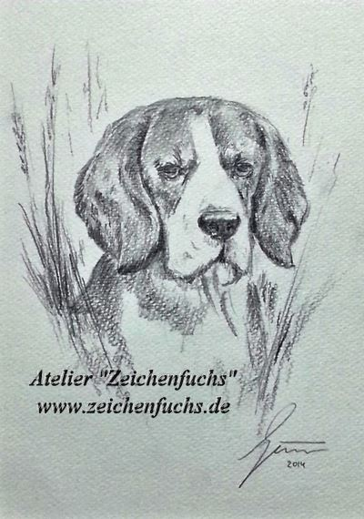 Bleistiftzeichnung eines Beagles