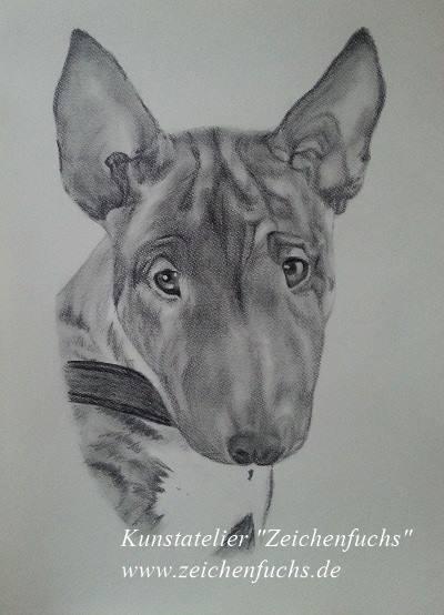 Bleistiftzeichnung eines Bullterriers