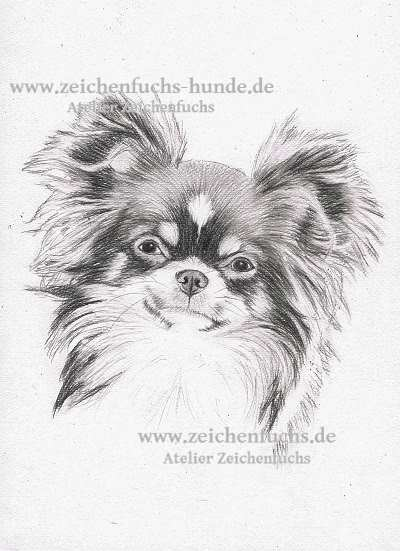 Bleistiftzeichnung des Chihuahuas Ruby