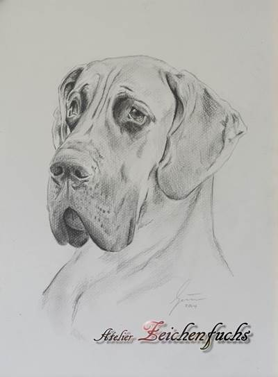 Bleistiftzeichnung einer Deutschen Dogge