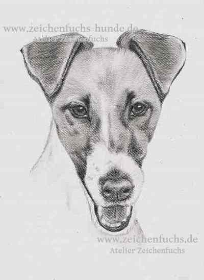 Bleistiftzeichnung eines Foxterriers