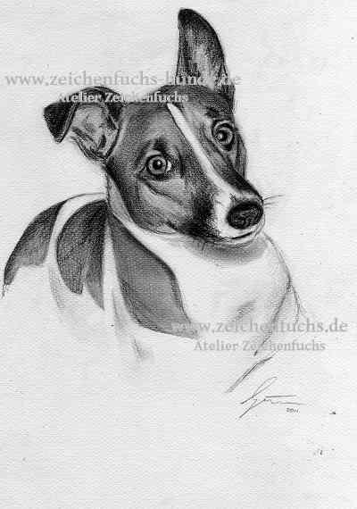 Bleistiftzeichnung vom Jack Russell Terrier