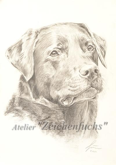 Bleistiftzeichnung eines Labradors
