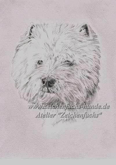 Bleistiftzeichnung eines West Highland White Terriers