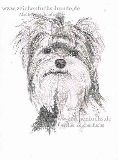 Bleistiftzeichnung eines Yorkshire Terriers