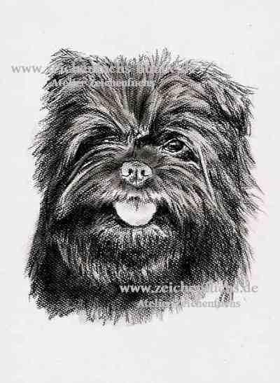 Kohlezeichnung eines Affenpinschers