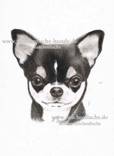 Kohlezeichnung eines Chihuahuas