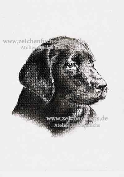 Kohlezeichnung eines Labradors