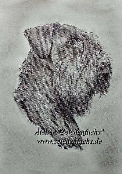 Kohlezeichnung||Hundezeichnung