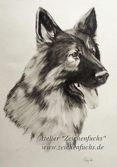 Kohlezeichnung eines Schäferhundes