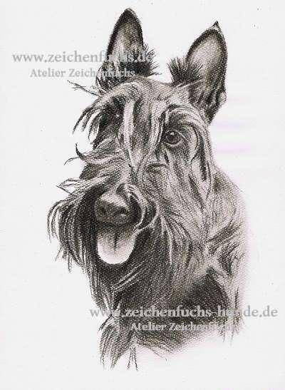 Kohlezeichnung vom Scottish_Terrier