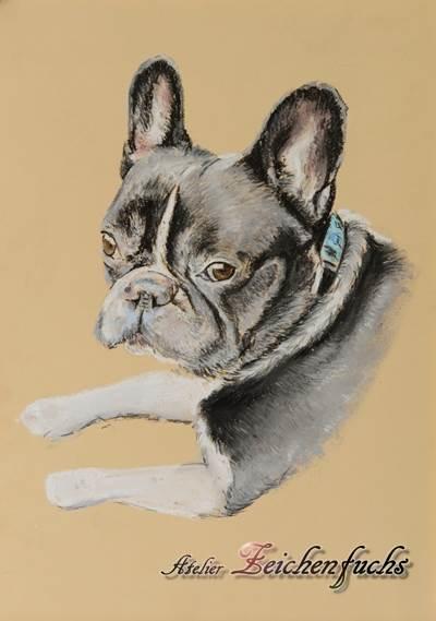 Pastell einer Französischen Bulldogge