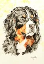 Aquarellportrait eines Berner Sennenhundes