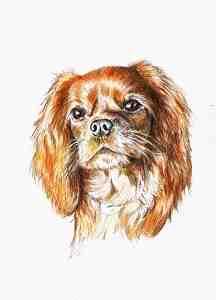 Aquarellportrait von einem Cavalier King Charles Spaniel