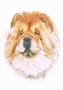 Aquarell eines Chow-Chow