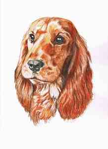 English Cocker Spaniel - Aquarellportrait