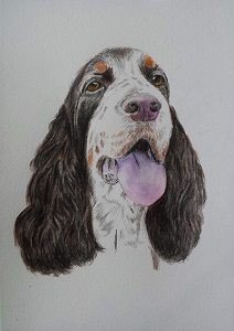 Aquarell English Springer Spaniel