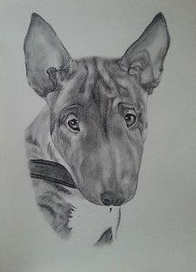 Bleistiftzeichnung Bullterrier