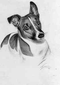 Jack Russell Terrier - Bleistiftportrait
