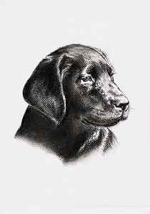 Kohlezeichnung von einem Labrador