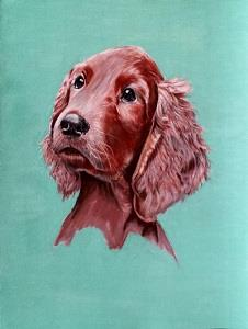 Pastell vom Irish Red Setter